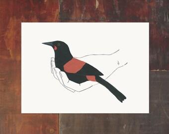 Bird In Hand Print - Saddleback - New Zealand Bird