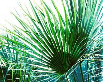 Palm Print, Tropical Photography, Palm Leaf Picture, Botanical Artwork, Modern Nature Photograph, Green Wall Art, Bathroom Decor