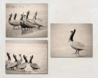 Pelican Picture Set of Three Prints, Coastal Wall Art Collection, Sepia Beach Artwork Grouping, 3 Photo Set, Seaside Photography