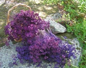 Special Order for Lisa's Wedding****Plum Purple Oregano Flowers****Please do not purchase unless you are Lisa!!!