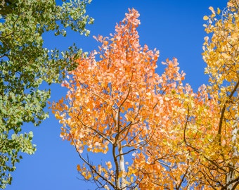Colorado Landscape Photography Print - Rocky Mountain National Park - Autumn Fall - MetalPrint Option - 11x14 16x20 20x30 24x36 30x40
