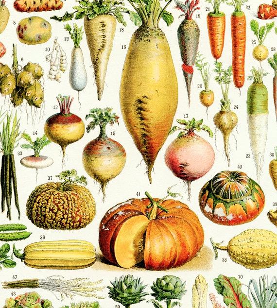Kitchen Decor Vegetables: Large Printable Vegetable Poster 1936 Vintage Kitchen