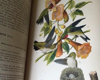 Audubon Birds of Pennsylvania 1890 100 book plates of artwork
