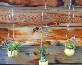 Hanging Bell Cup Air Plant Holder Trio - A Unique Holiday or Birthday Gift