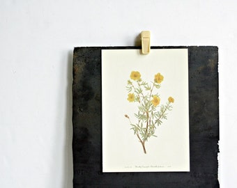 Vintage 1950's Botanical Bookplate - Cinquefoil Flowers - Spring Home Decor, Gifts for Her, Mothers Day, Summer Boho, Yellow Floral Decor