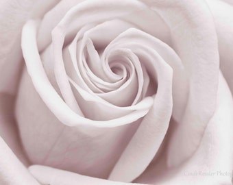 Pink Rose,  Photography, Garden, Floral Photography, Botanical, Flower Photography