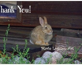 Adorable  Baby Bunny Thank You Cards - Greeting Cards - Note Cards with White Envelopes. Blank Inside.