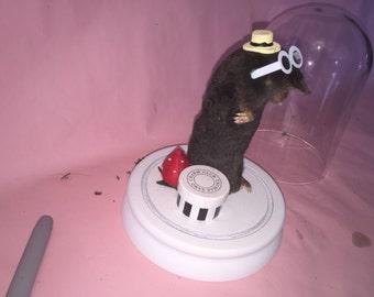 Mr mole