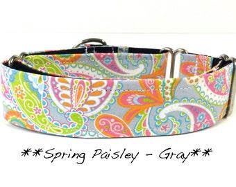 Martingale Dog Collar - Spring Paisley