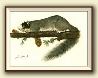 PRINT-Southern Fox Gray Squirrel forest - squirrels animal - squirrel- art wall squirrel animal forest  - Art Print by Juan Bosco