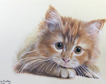 ORIGINAL colored pencil kitten 9X12