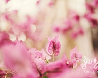 Flower Photography, Pink,  Botanical Art Print, Shabby Chic Nature Photography, Romantic Home Decor - Nice Dream