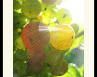 Summer Grapes Fine Art Photograph, Wall Art, Fruit Image, Gift, Farm Print, Kitchen Art, Food Photo, Summer Image, Harvest Photo, Grapes Art
