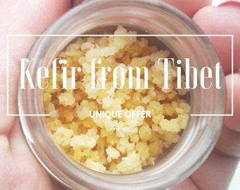 Unique Dehydrated (Dry) Tibetan Mushrooms Milk Kefir Grains from Tibet's Yogis | Free delivery worldwide