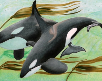 Mama's Boy - Killer Whales Original Copic Marker Drawing