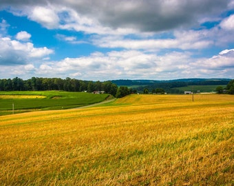 View of farm fields and rolling hills in rural Carroll County, Maryland. | Photo Print, Stretched Canvas, or Metal Print.