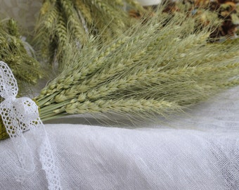 Bearded wheat - dried wheat - bridesmaid bouquet - fall - harvest - autumn -  cereals - ears - home decor