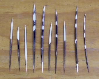 10 African Porcupine Quills