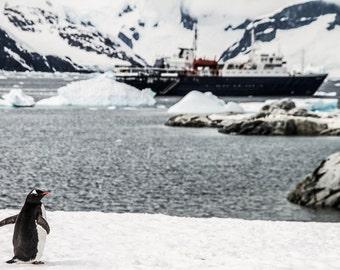 Penguin, Boat, Ice, Winter Landscape Photography, wild Photography, Antarctica, Nature Photography, Fine Art Photography, Digital Download