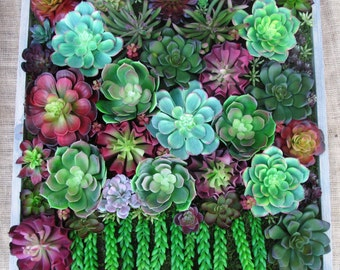 Succulent Living Walls in Real or Artificial Succulents