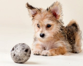 Wool Balls for Dogs- Durable Organic Wool Dog Toy