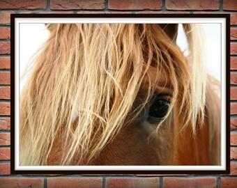 Horse print, color horse photo, western decor, equine art, horse art, horse decor, horse wall art, horse photography, color photo *181*