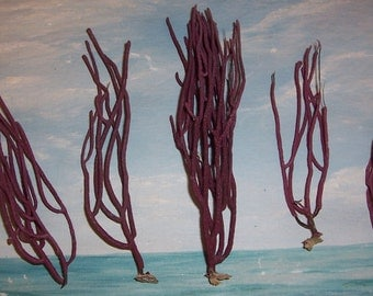 Lot/5 small Spikey Red Gorgonian SEA WHIP Coral False Sea FAN from Florida Beach #39