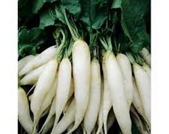 Radish- White Icicle- 200 Seeds each pack