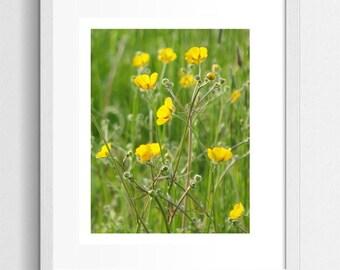 Nature Photography, Yellow Buttercups, Art Print, Meadow, Sunshine, Yellow Buttercup, Wall Art, Summer, Wild Flowers, Green Grass, Art Photo