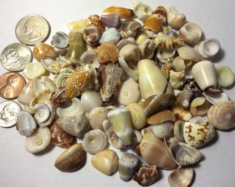 CLEARANCE Assortment of 100+ Hawaiian Shell Pieces