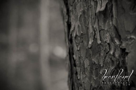 Large Print, Black and White, Nature Photography, Red Pine Tree Photo, Tree Bark, Tree Print, Monochromatic, Heartland, Minnesota