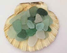 Large scallop shell, loose sea glass,  seashell decoration, Seaglass candle stand