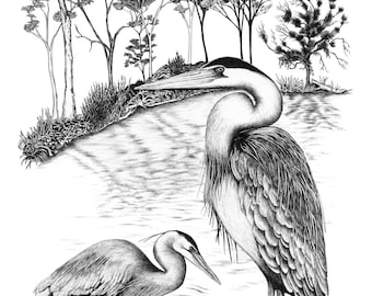 Great Blue Heron and rookery