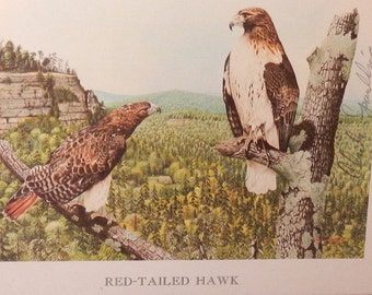 Charles Spaulding Red Tailed Hawk Signed Print!