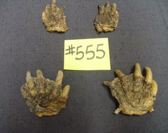 Set of 4 Real Authentic Snapping Turtle Paws with Claws (#555)