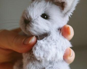 Colin Teddy Bunny Rabbit