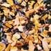 Assam Lemon Lavender Tea