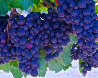 Vineyard Grapes Winery Photography Wine Flight Purple Grapes Kitchen photo Home Decor Wall Art Wine Vineyard