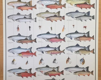Hobby Poster Chart Trout Salmon Char Poster 27 x 39 made in Italy