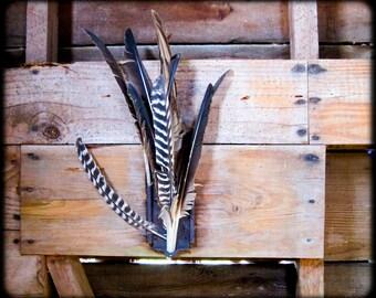 Feathers, photo on polished aluminum