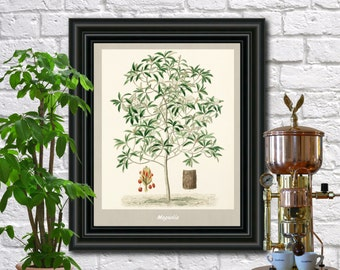 Magnolia Botanical Print Vintage Magnolia Illustration Kitchen Wall Art Poster  0455