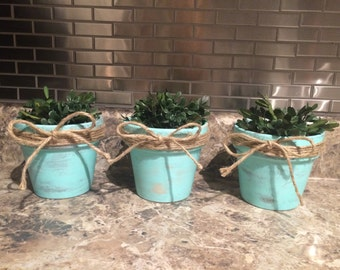 Set of 3 Turquoise Clay Pots with Plants