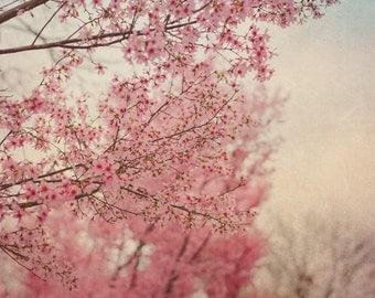 Cherry Blossom Spring Photo, Spring Photography, Blue, Pink, Nursery Art, Room, Nature, Pastel, Tree Photo, Spring Tree Photo, Nature Print