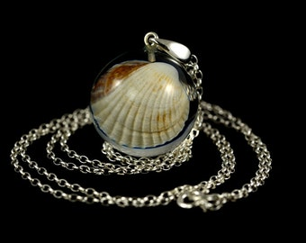 Pendant with natural shell in resin sphere on a silver chain. Resin jewelry. Natural shell in resin. Sphere 2.5 cm. Chain 80 cm.