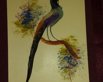 Mexican bird feather painting