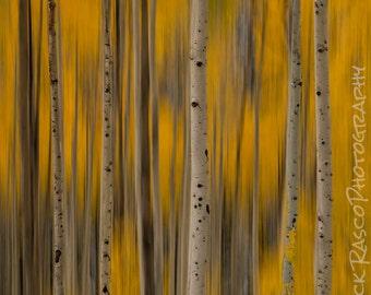 Photo Art - Fall Colors- Aspen Trees