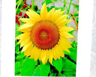 Clearance Sale! 7.00 off!!! Sunflower, giant, helianthus, photograph, 8 x 10, 11 x 14 mat