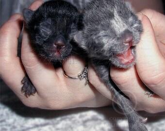 Photo: Newborn Kittens, Cats, Animal Photography, Color, Wall Decor photo, Fine Art Photography Print [gry]