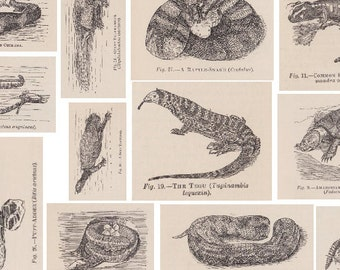 Victorian Reptiles - 3 Printable A4 PDF Sheets - inc. Amphibians, Tortoises, Turtles, Frogs, Snakes - Vintage Decoupage Paper, Collage