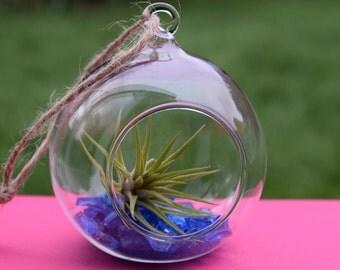 Air Plant Garden Jar Terrarium Unique Handmade Gift